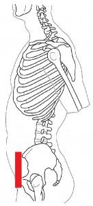 骨盤ニュートラル1