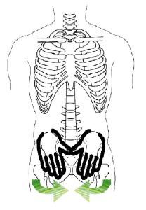 骨盤ニュートラル3骨イラスト